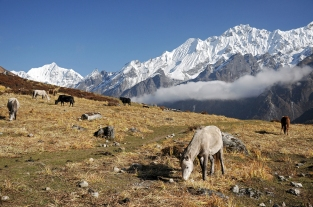 Langtang (Nepal)