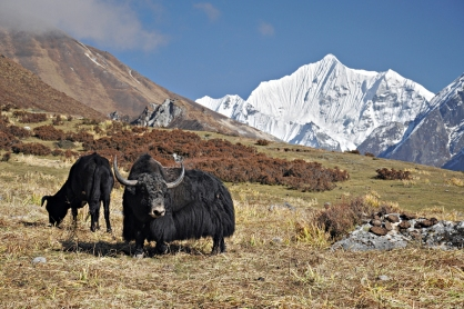 Mieszkańcy Doliny Langtang (Nepal)