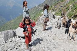 Pasterze (okolice Thulo Bharkhu)