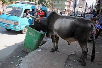 Utylizacja po nepalsku