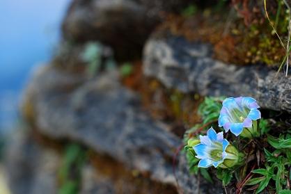 Nepalska flora