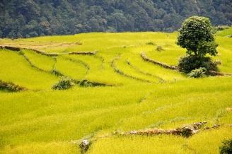 Nepalskie uprawy