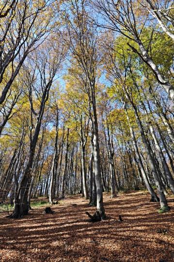 Beskidzka jesień (Beskid Żywiecki)