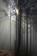 Fatrzański las