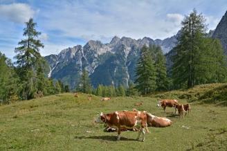 Alpejskie hale