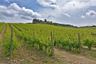 Dolina Chianti