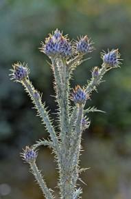 Pustynna flora