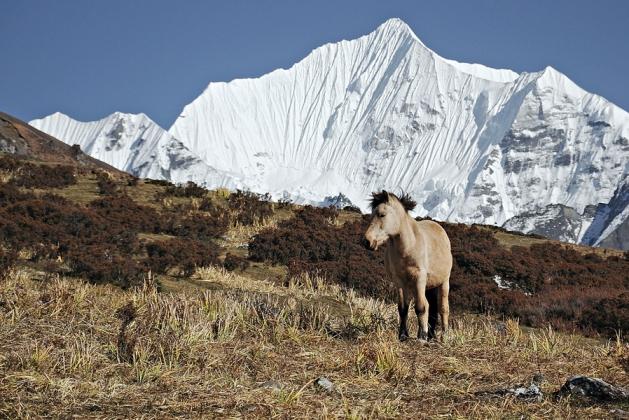 Krajobraz górnych partii Doliny Langtang
