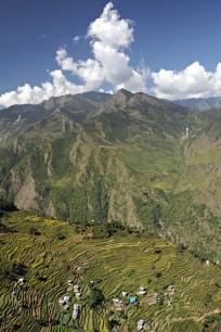 Pola ryżowe (okolice Thulo Bharkhu)