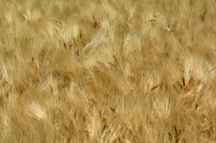 Obrazek z Moraw Południowych