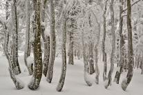 Beskid Śląsko-Morawski zimową porą