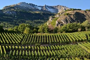 Okolice Sion (Valais, Szwajcaria)