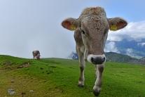 Alpejskie klimaty